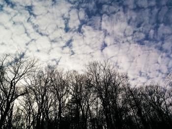 Leave-less trees and snow-less clouds