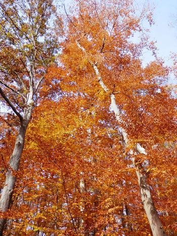 Fall foliage near the Croton Dam