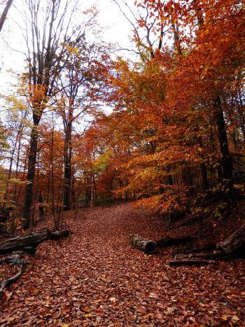 Croton Gorge Trail