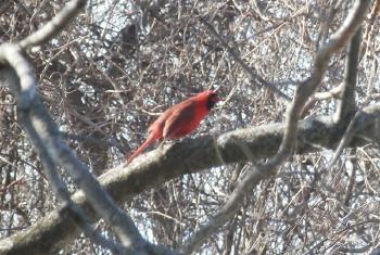 Same cardinal, different tree