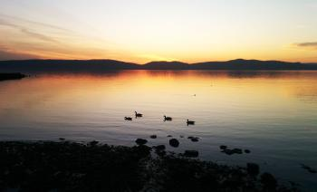 Goose goose duck. Canadian geese coasting in the water with a duck nearby (and others under water) at Haverstraw Bay during sunset.