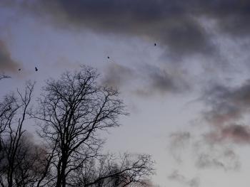 Black and turkey vultures en masse.