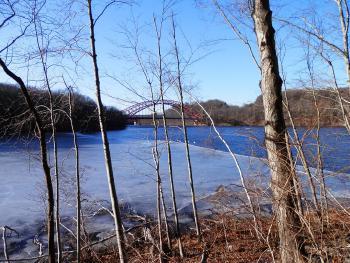 Swans in New Croton Reservoir, Amvets Memorial Bridge in distance.