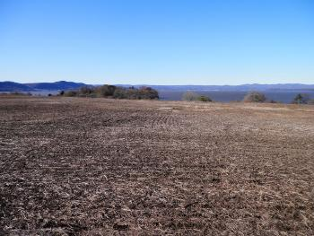 Denuded grassland hilltop at Croton Point Park, part of plan to re-introduce native species.