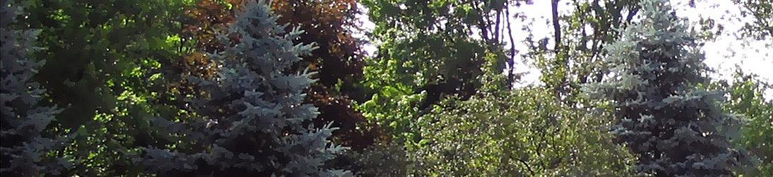 Early Morning Woodpecker Wakeup