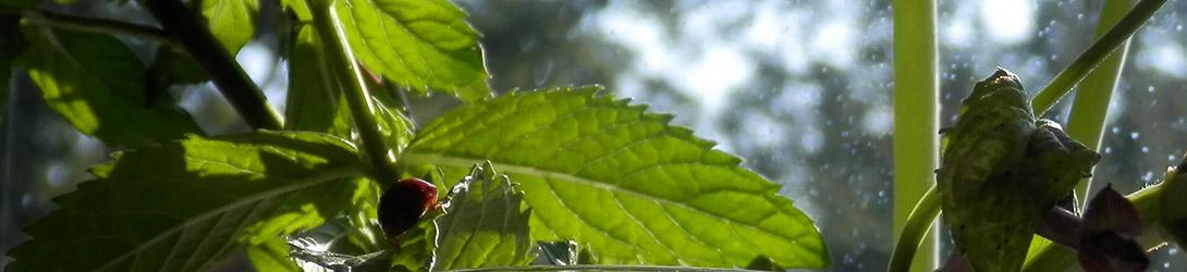 Mint Fresh Ladybug