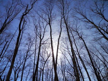 Sky. And trees. © 2015 Peter Wetzel.