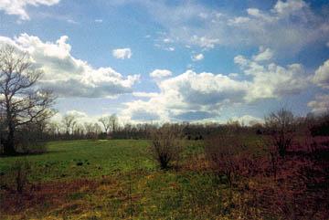 Field (1994), watercolor effect. © 2015 Peter Wetzel.