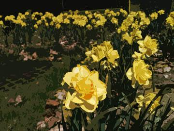 Flowers, multiple effects. © 2016 Peter Wetzel.