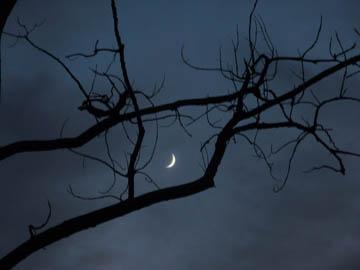 Moon sliver and tree. © 2016 Peter Wetzel.