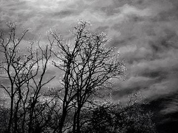 Dark trees (2015), watercolor effect. © 2016 Peter Wetzel.